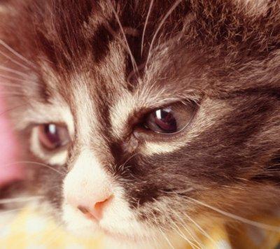 dolore_gatto.jpg