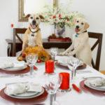Alimentazione del cane: i cibi da evitare