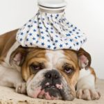 Malattie batteriche del cane: quali sono le più comuni?