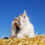 Allergie nel gatto: quali sono le più comuni?