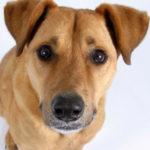 La congiuntivite nel cane: tipologie, sintomi e trattamento