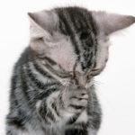 Perché il gatto starnutisce?