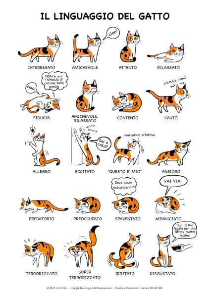 Cat Language - Italian (424 x 600)