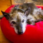La cura del cane anziano: alcune linee guida importanti