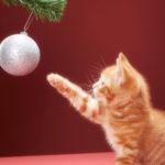 Natale: consigli per la sicurezza del gatto