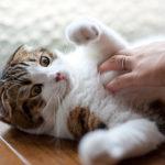 Come educare un gatto che gioca in modo aggressivo