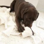 Infezioni delle vie urinarie nel cane: cause, sintomi e cure