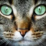 Il linguaggio del corpo dei gatti: come comprenderlo