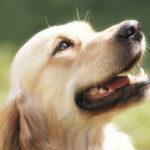 Malattie gengivali nel cane: cause, sintomi, cure e prevenzione