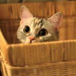Ipertiroidismo nel gatto: sintomi, diagnosi e terapia