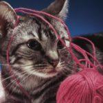 Panleucopenia felina: cause, sintomi e terapia