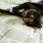 Quando il gatto sporca in casa: eliminazione inappropriata e marcatura urinaria
