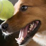 Stomatite nel cane: sintomi, diagnosi e trattamento
