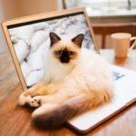 Idronefrosi nel gatto: cause, sintomi e trattamento