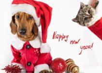 capodanno e animali domestici
