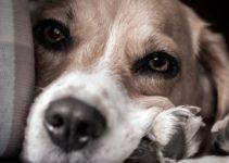carenza di magnesio nel cane