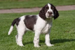 carenza mielina nel cane