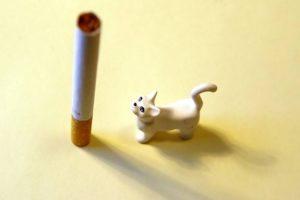 effetti fumo passivo sugli animali domestici