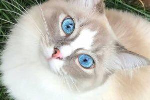 iponatriemia e ipernatriemia gatto