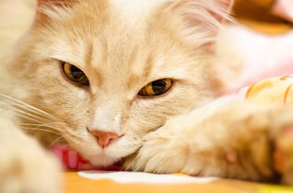 sintomi da non ignorare gatto