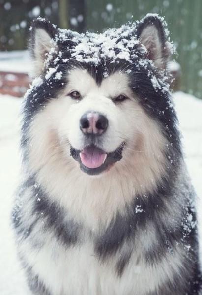 dermatosi zinco responsiva cane