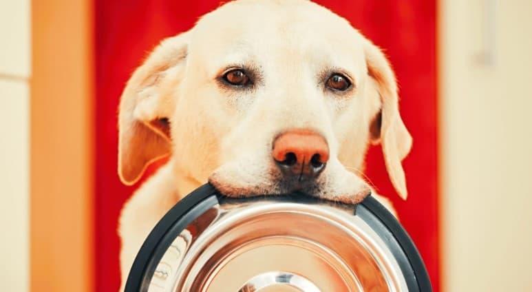 come cambiare alimentazione al cane