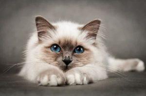 ipersalivazione nel gatto