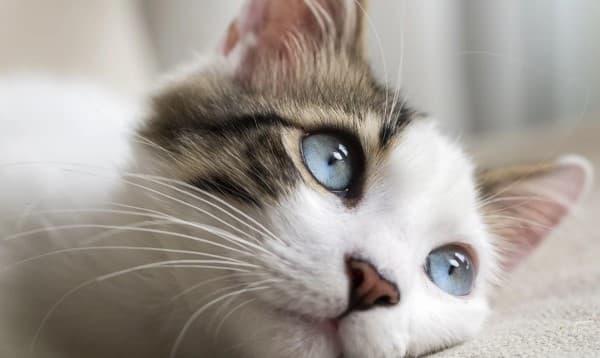 esofagite da reflusso nel gatto